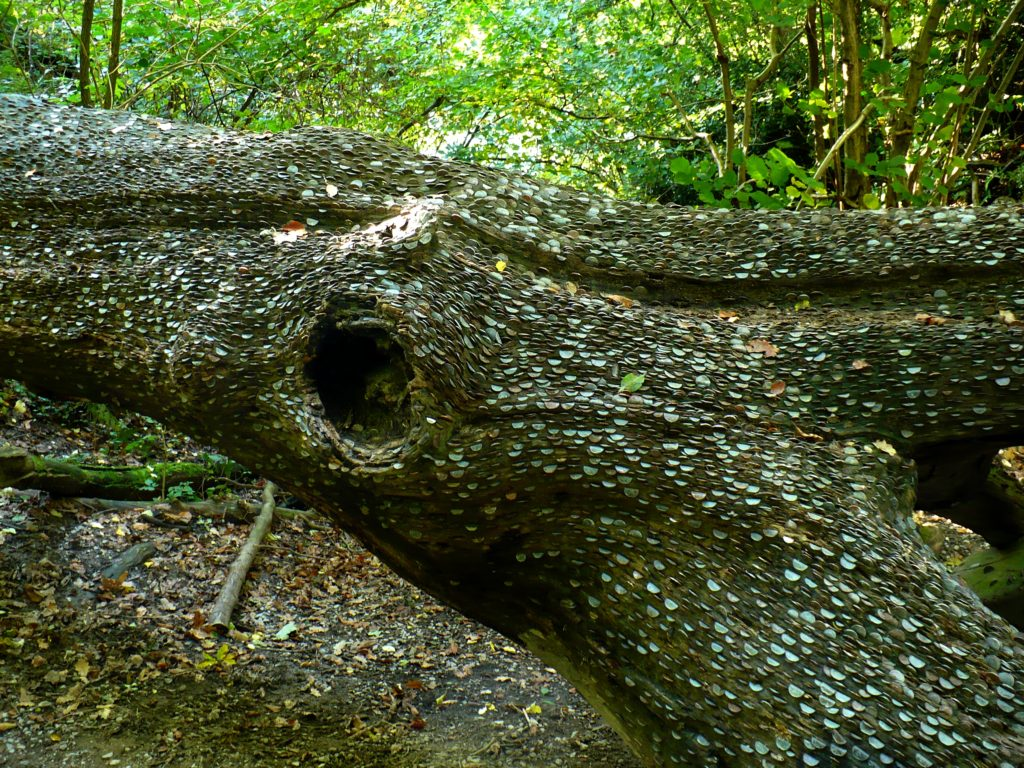 Kmen stromu v Bolton Abbey - cestopis Severovýchodní Anglie
