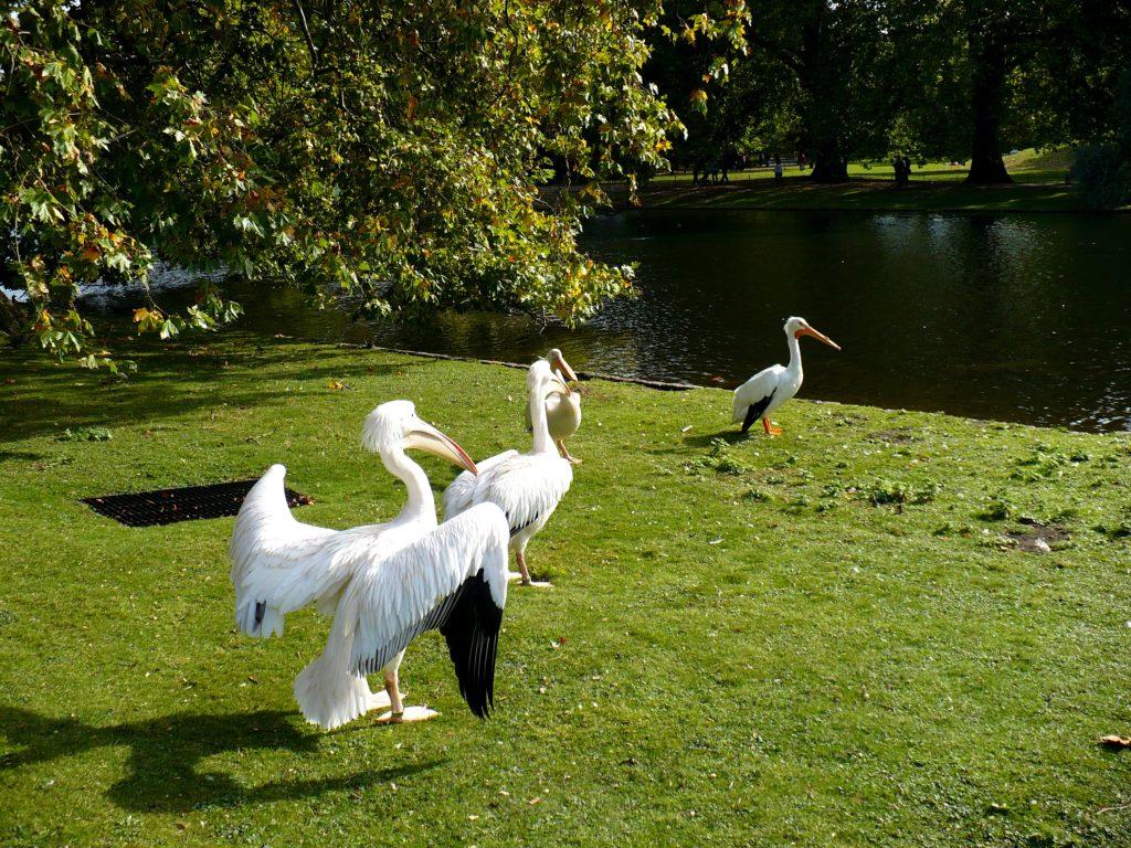 St. James Park, Londýn - Cestopis Severovýchodní Anglie