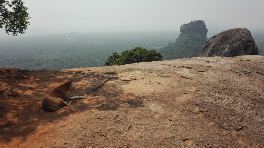 Pidurangala Rock, cestopis Srí Lanka